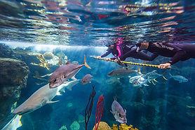 shark_swim4.jpg
