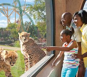 BGT-Cheetah-Hunt0_7e1b5de1-5056-a36a-08b