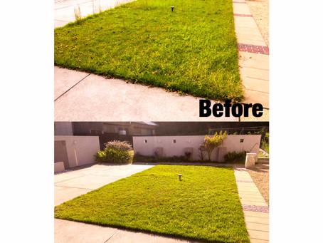 芝のお手入れ作業