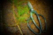 庭木の剪定について|三重県剪定伐採お庭の手入れ専門店 剪定屋空