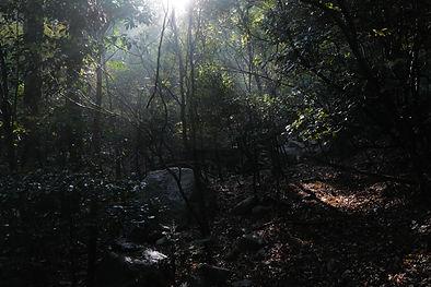 菰野町の自然