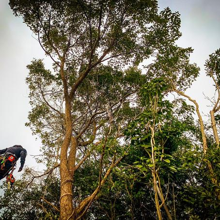 鈴鹿市にて支障木樹木の伐採と草刈り作業ご依頼