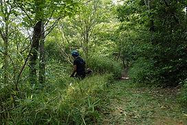三重県 森林管理