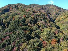 三重県 植林