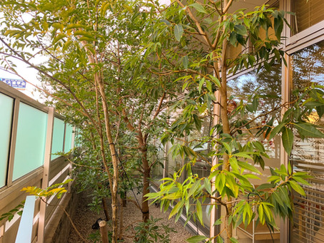 津市にて庭木定期管理にお伺いさせていただきました。