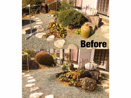 鈴鹿市植栽|お庭縮小工事、ソヨゴ植栽作業
