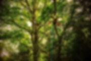 ドローン伐採.jpg