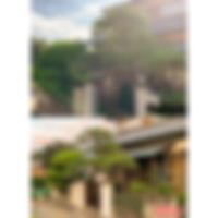 三重県 松剪定.JPG