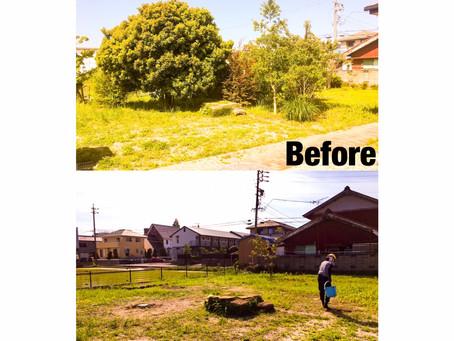 朝日町伐採|樹木伐採作業