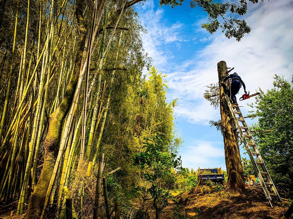 庭木や樹木 越境トラブル 三重県剪定伐採専門店 剪定屋空