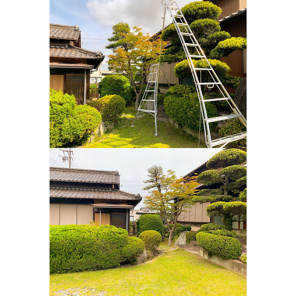 三重県朝日町にて庭木の剪定作業