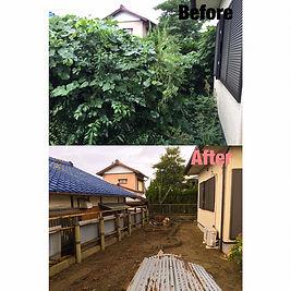 朝日町 庭木伐採