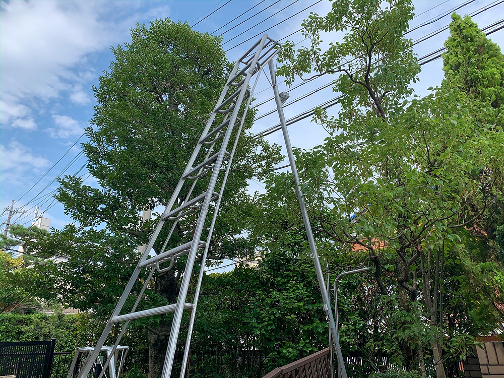 縁起が良いクロガネモチの木|三重県剪定伐採専門店 剪定屋空