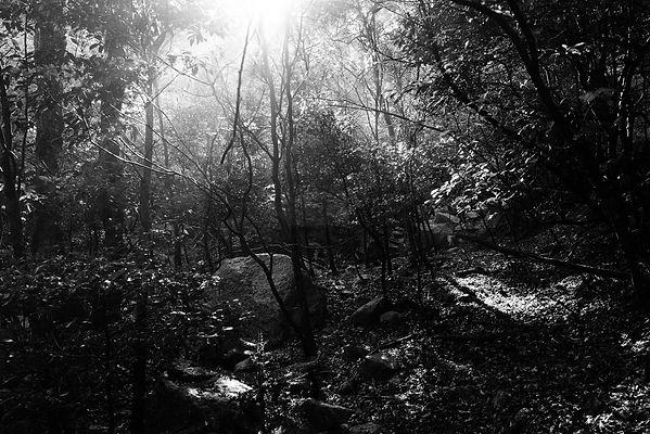 三重県 森林面積