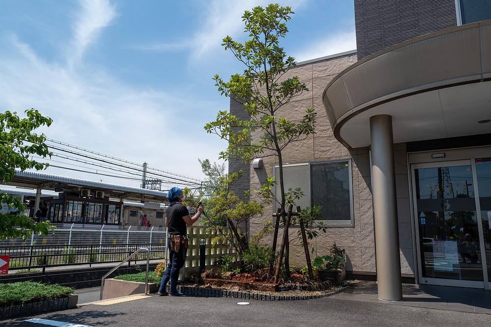 桑名市にて幸福の再来を願う木を中心に庭改修工事