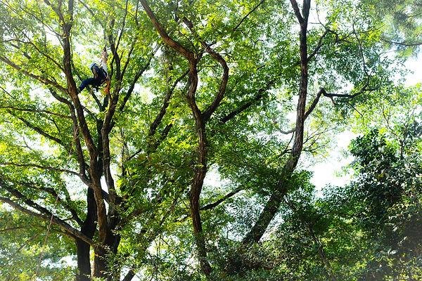 菰野町 森林整備
