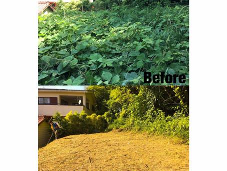 桑名市草刈り作業事例