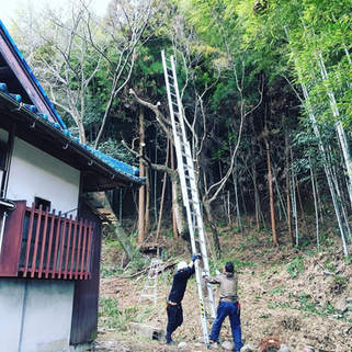 桑名市 竹伐採