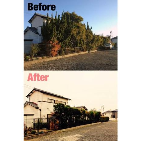 桑名市伐採 庭木手入れ作業事例
