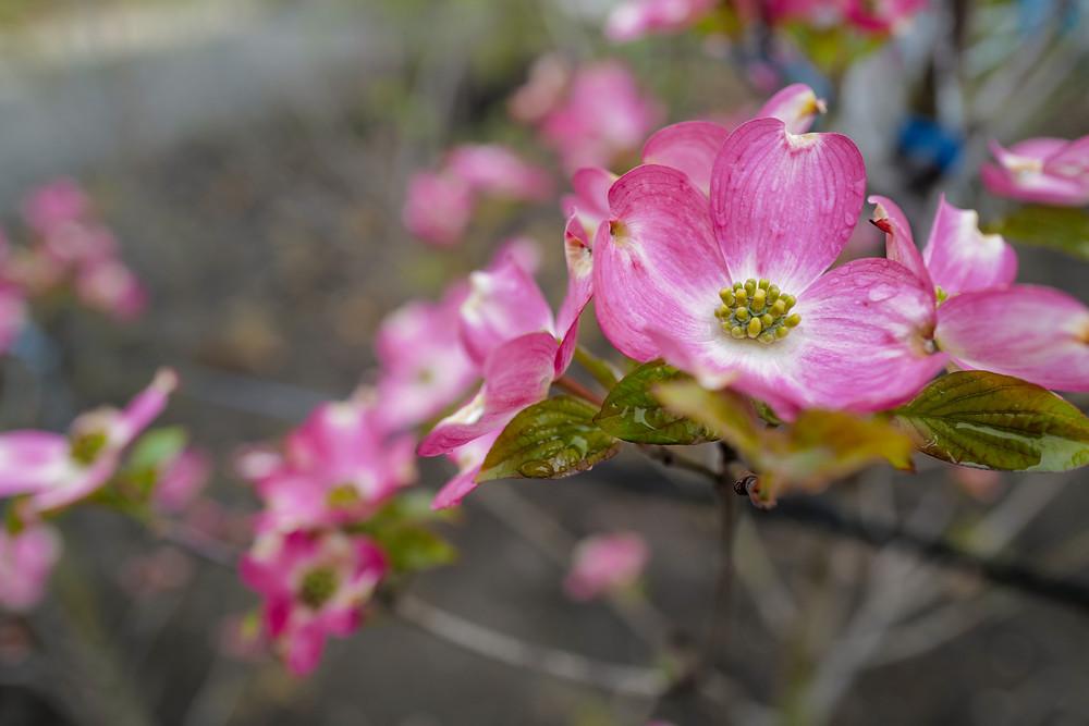 県内外9社の造園業者(2021年4月現在)が作庭したお庭が春の花々を咲かせています。