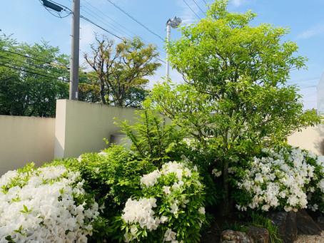 鈴鹿市剪定|お庭お手入れ樹木成長記