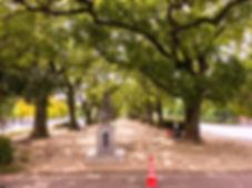 四日市市役所前楠の木