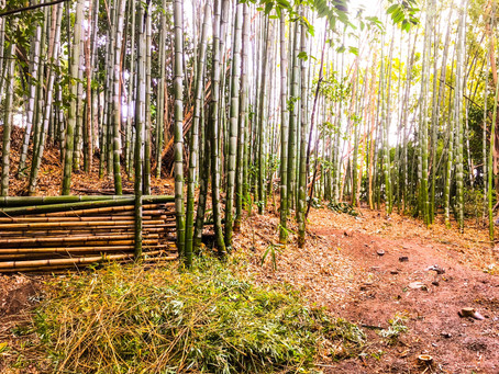 四日市伐採|竹林、支障木伐採作業