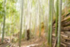 多度町 竹林整備