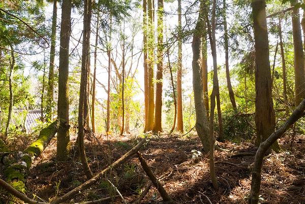 三重県 森林サービス