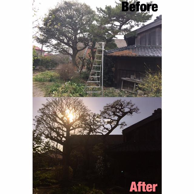 鈴鹿市にて庭木の剪定、伐採作業事例