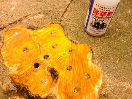 伐採した木を枯らす方法・樹木の根枯処理