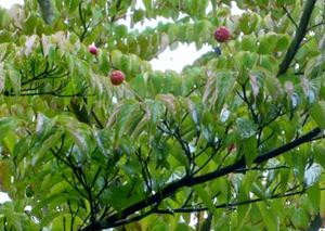 剪定屋空| 三重県剪定伐採お庭のお手入れ専門店