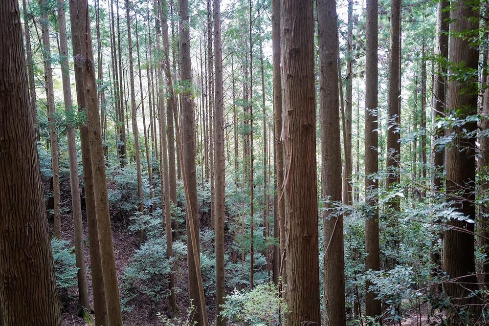 みえ森林・林業アカデミー
