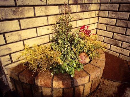 四日市植栽|花壇に寄せ植え植栽作業