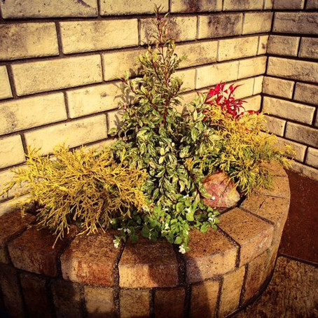四日市植栽 花壇に寄せ植え植栽作業