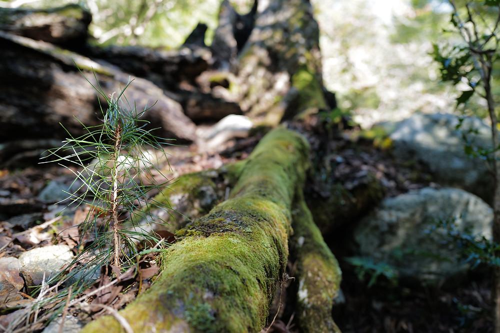 三重県で樹木の越境問題 に 三重県剪定伐採専門店 剪定屋空