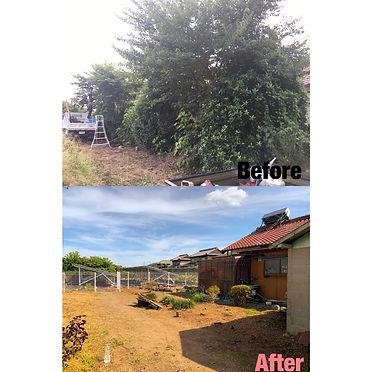 亀山市 庭木 伐採