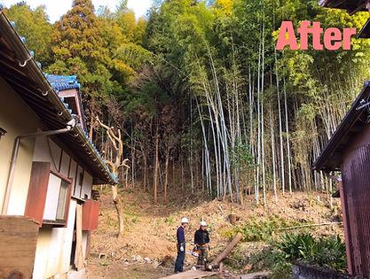 四日市 竹 伐採