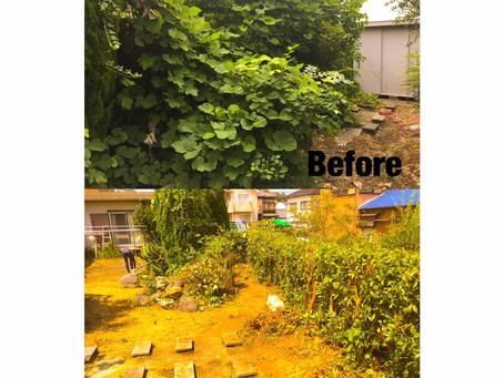 四日市市にてツタ除去作業と生垣の刈り込み