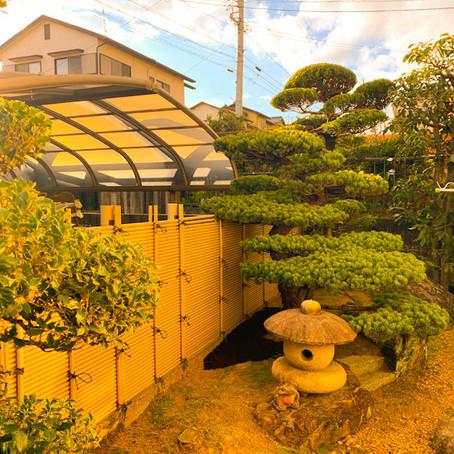 三重県桑名市にて五葉松の剪定作業|剪定屋空