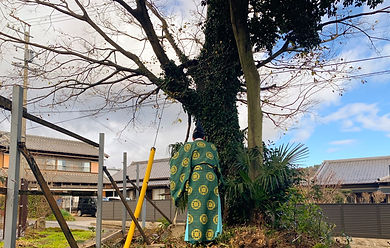 三重県四日市市で大木榎の伐採前お清め| 三重県剪定伐採専門店 剪定屋空