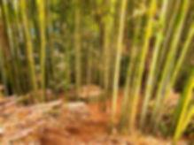 亀山市 竹 伐採