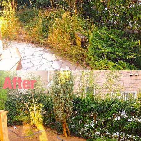 桑名市草刈り お庭の雑草対策