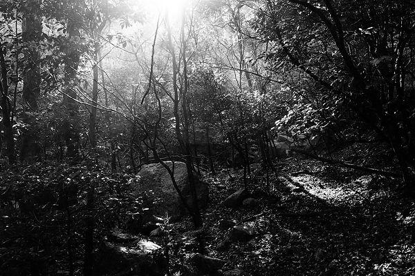 三重県 森林整備