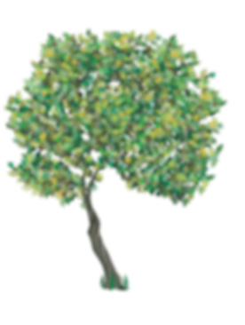 Pruning garden tree.png