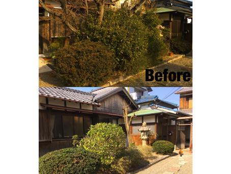 庭木一部剪定作業と桜の伐採作業ご依頼