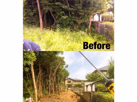 鈴鹿市伐採|雑木の樹木伐採作業ご依頼