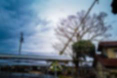 三重県四日市市で高木伐採作業.JPG