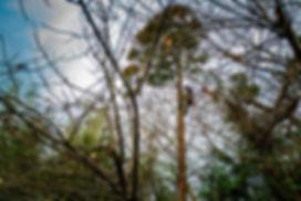 三重県 杉伐採