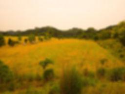 鈴鹿市 草刈り